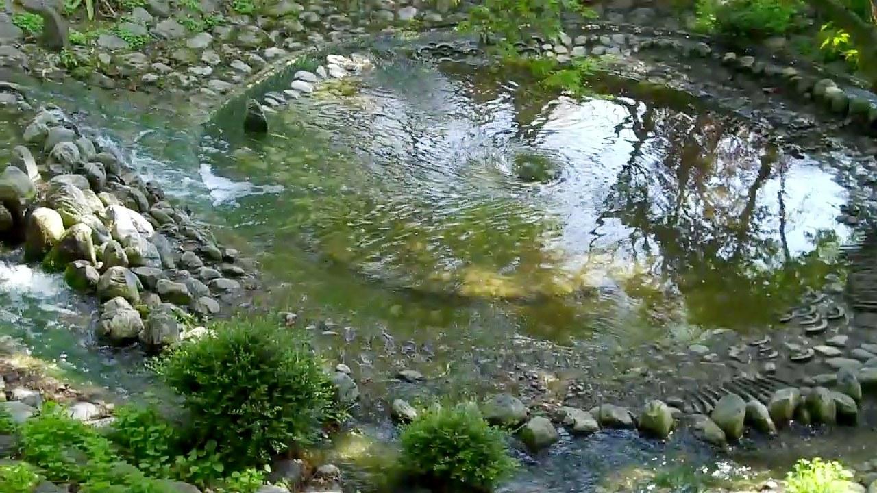 Le jardin albert kahn triton95 - Les jardins albert kahn ...